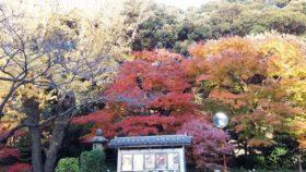 もうクリスマスを過ぎて、辺りの木の葉はほとんど落ちてるというのに、目黒雅叙園の前だけはきれいな紅葉。
