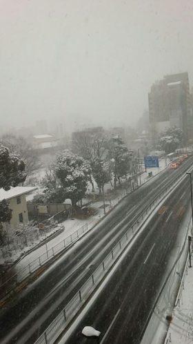 東京、かなり雪が積もってます。