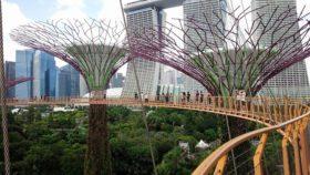 年末年始に行ったシンガポール、都市は無機質なくらい整然としてるのが気になりました。