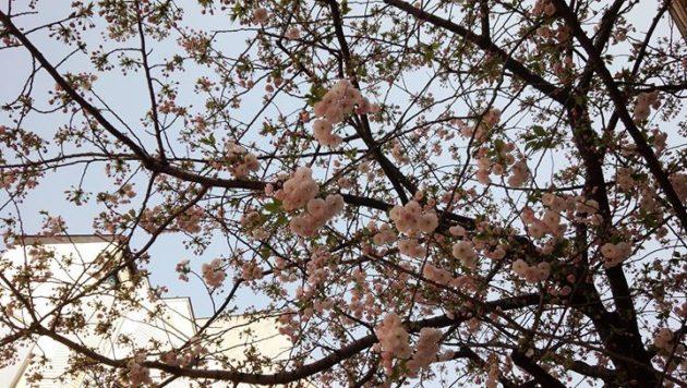花見と春休みとあいまって、浅草はすごい人混みです。