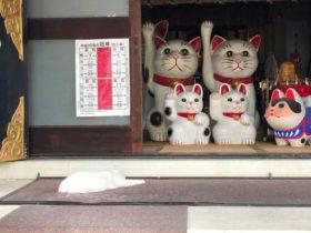 浅草にある縁結びで有名な今戸神社。