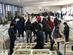 糸魚川のリノベーションスクールのクロージングパーティでケータリングをしてくださる方のお供で漁港へ。