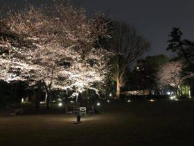 庭園美術館の庭園が昨日と今日だけ、夜間開園してました。