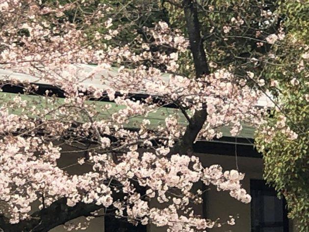 札幌から3度目の東京に引っ越してきたのはちょうど桜の季節。