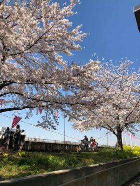 桜も満開が過ぎて吹雪のように舞っていました。